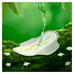 Naturella_Ultra_podpaski higieniczne, 20 szt./1 opak._4